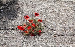 rot.beton